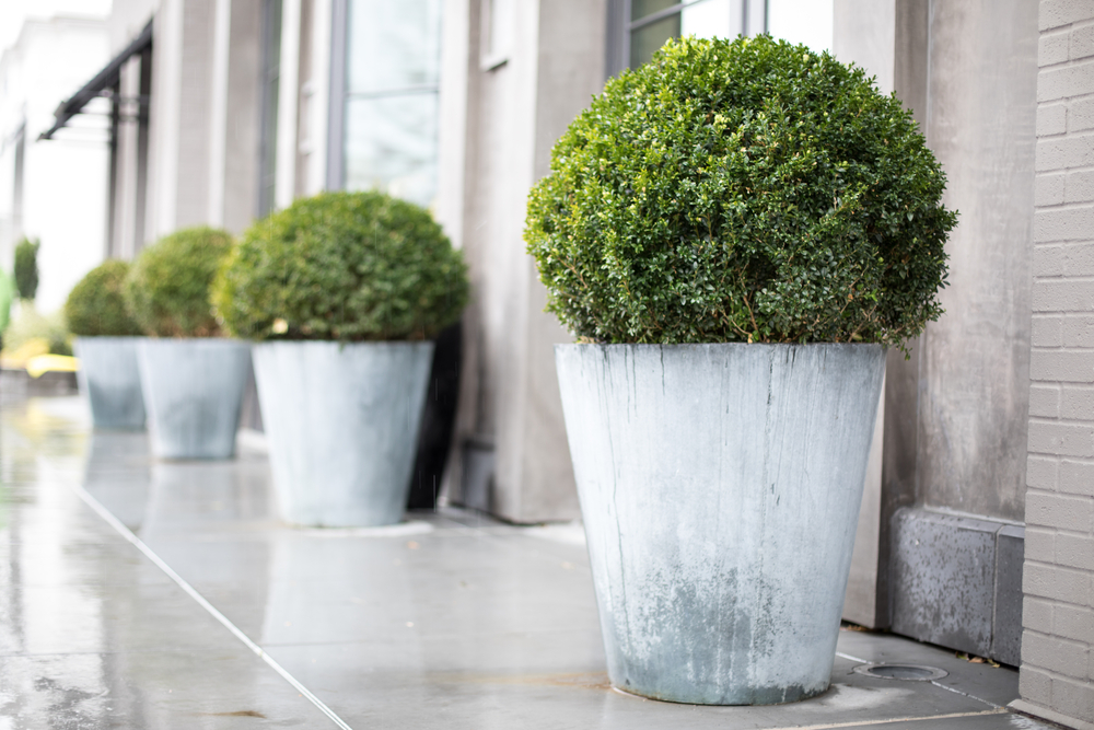 4 Unique Planter Ideas To Inspire You Cottonwood Landscaping